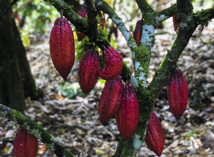 Onde nasce o melhor chocolate de São Paulo